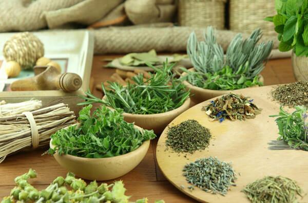Травы и растения от аскаридоза