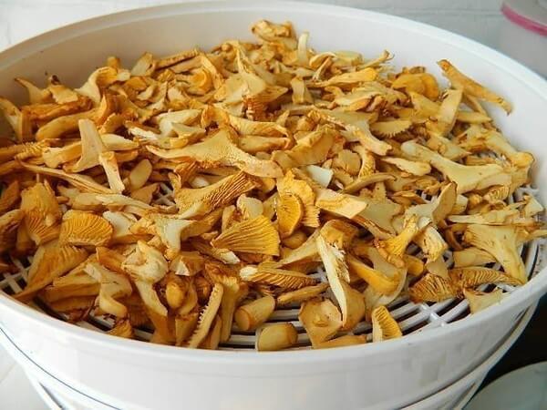 Правильная заготовка грибов