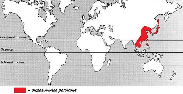 Регионы основного заражения