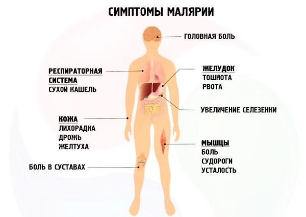 Заражение малярийной гемоспоридией