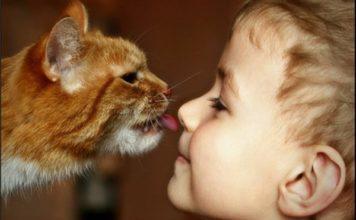 Гельминты от кошек