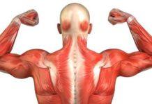 Паразиты в мышечной ткани