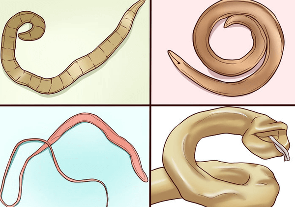 Виды глистов в человеческом организме