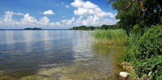 Церкарии в озере