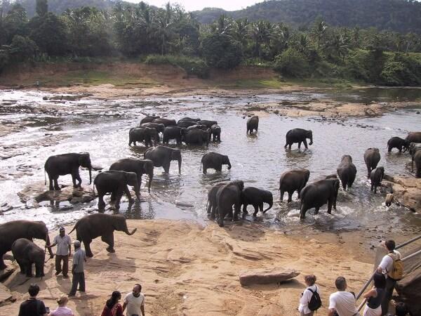 Водопой в Азии