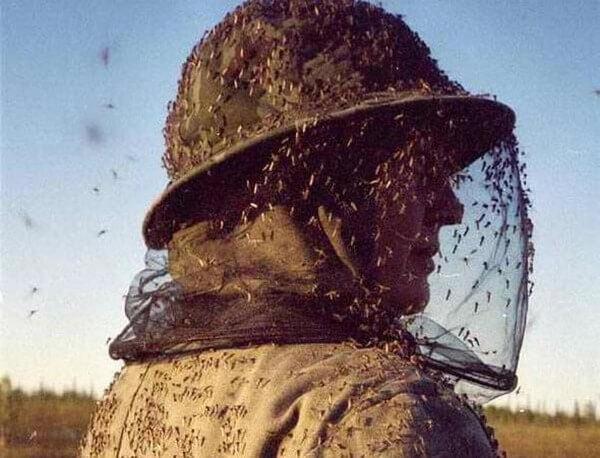 Одежда от комаров