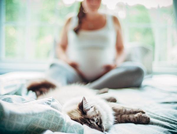 Кошки - разносчики токсоплазмы