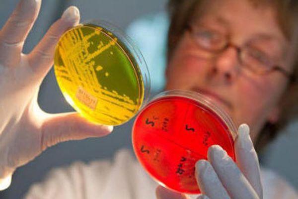Бактериальный посев на стафилококк