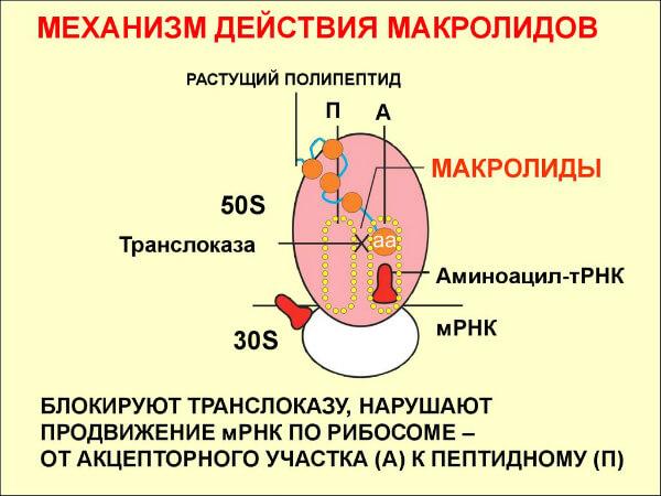 Макролиды против стафилококка