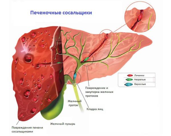 Триклабендазол против гельминтов в печени