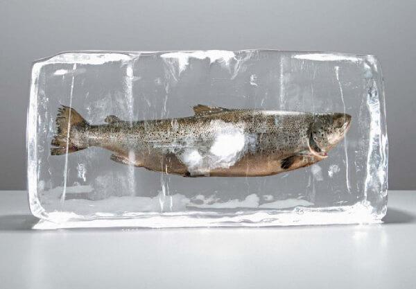 Обеззараживание рыбы от паразитов с помощью заморозки