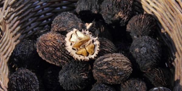 Черный орех против паразитов