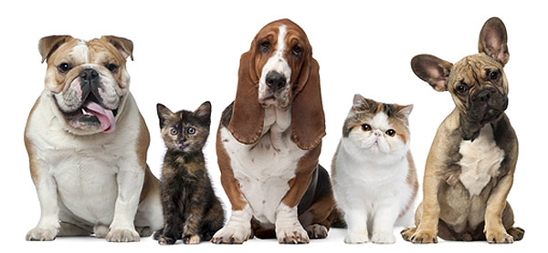Азинокс для кошек и собак