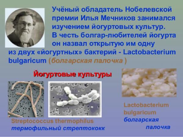 Открытие молочнокислых стрептококков