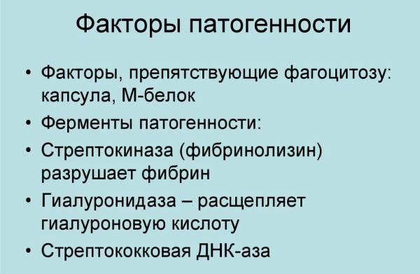 Особенности стрептококка