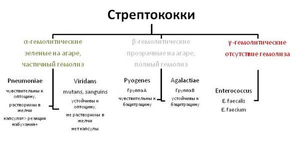 Основные группы стрептококков