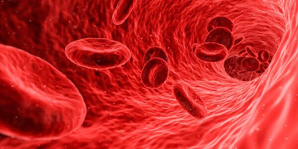 Анализ крови на цисты лямблий