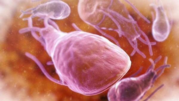 Лямблиоз печени: симптомы, диагностика, лечение