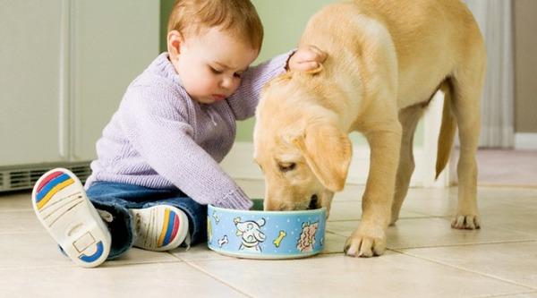 Домашние животные - частая причина заражения
