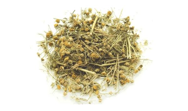 Для рецептов от глистов используется засушенное растение