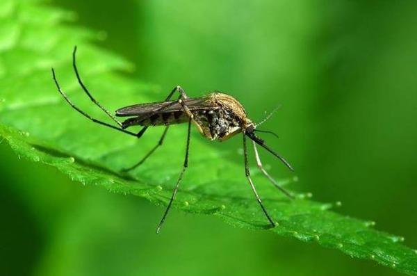Уничтожение комаров - основная мера профилактики