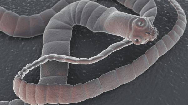 Особь ленточного червя