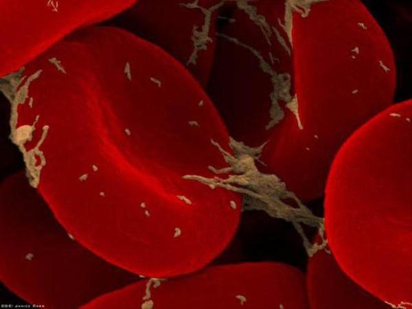 Паразитические организмы в крови