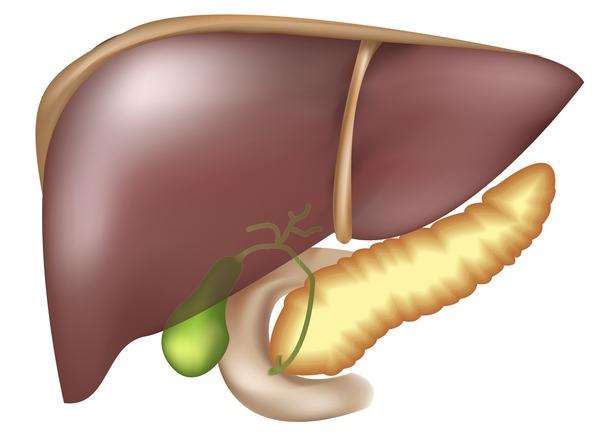 Печень и желчный пузырь могут быть заражены глистами