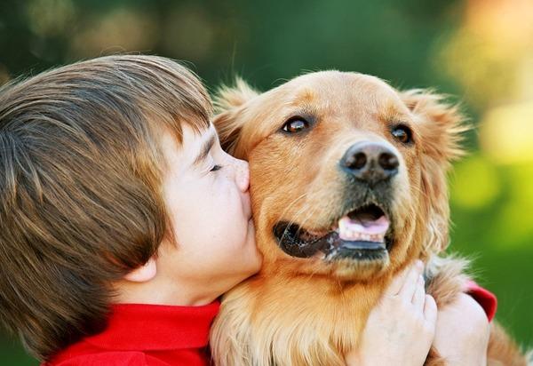 Животные - частая причина заражения