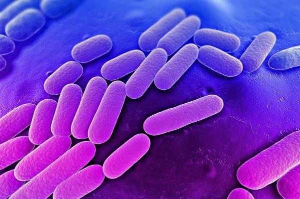Группа бактерий