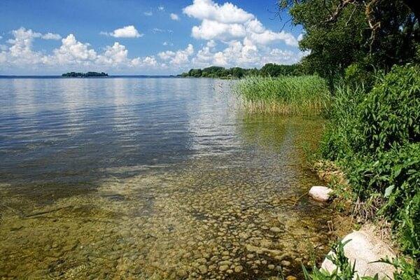 Озеро, зараженное церкариозом