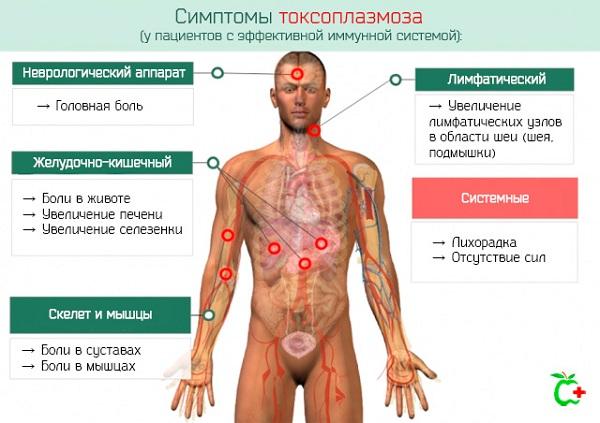 Симптомы токсоплазмоза у здорового человека
