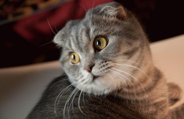 Кошка - окончательный хозяин токсоплазмы