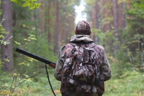 Опасность лосиных вшей для человека