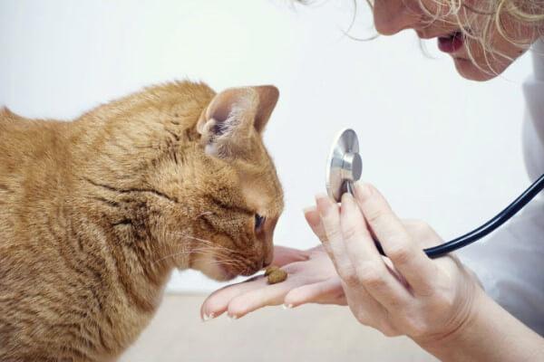 Огуречный цепень у кошек