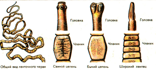 Никлозамид при цестодозах