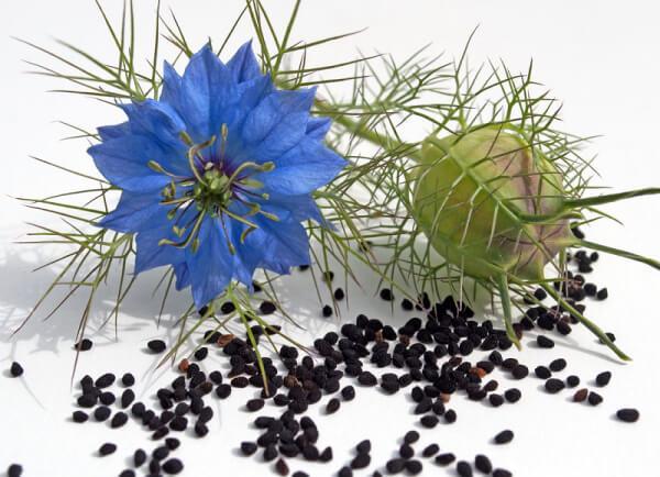 Сырье для производства масла черного тмина