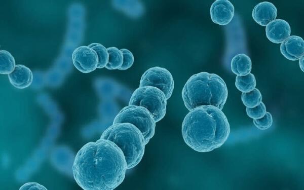 Гемолитические стрептококки