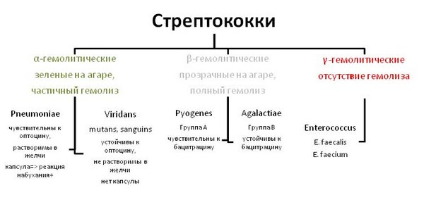 Особенности стрептококка группы А