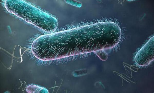 Бактерии дизгруппы