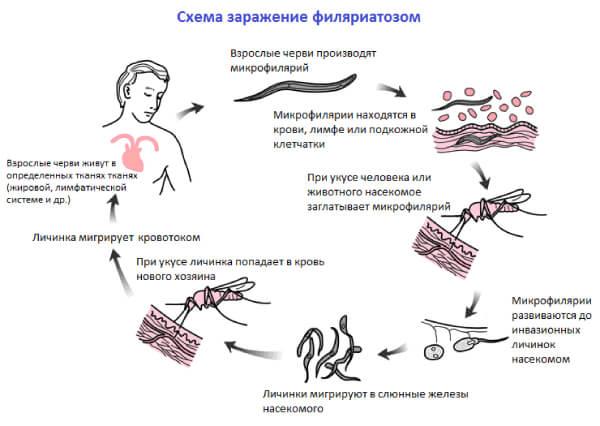 Заражение филяриатозом