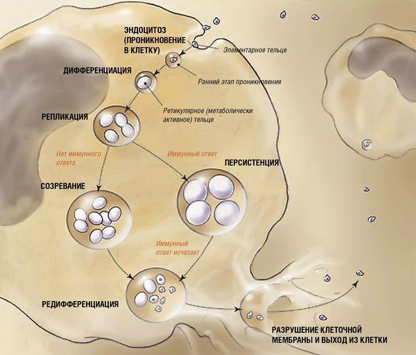 Пневмония, вызванная хламидиями
