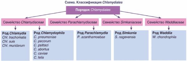 Систематика хламидий